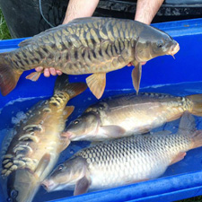 Yet-y-Gors Fishery